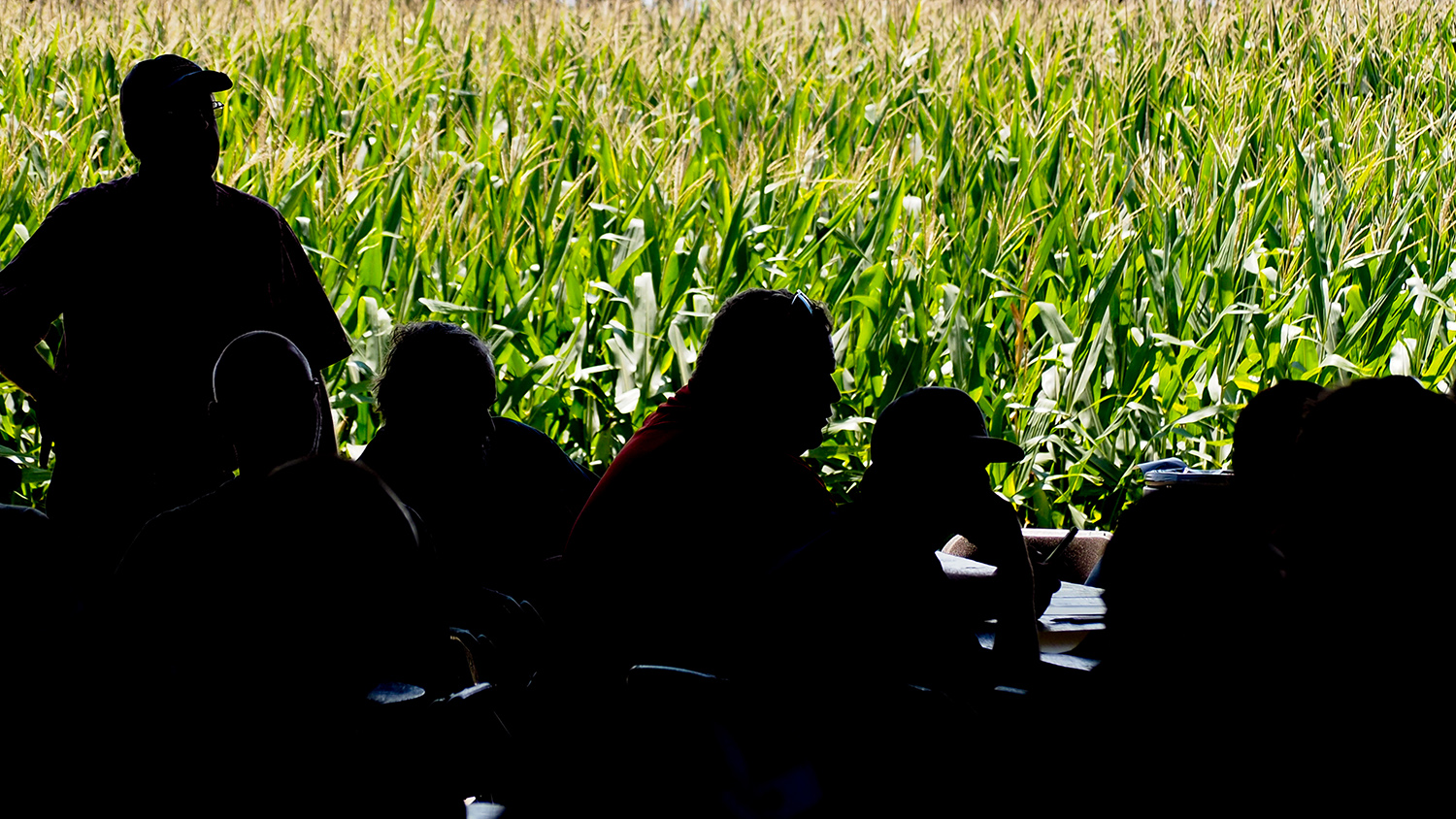 Photo of crops in background with farmers in foreground.