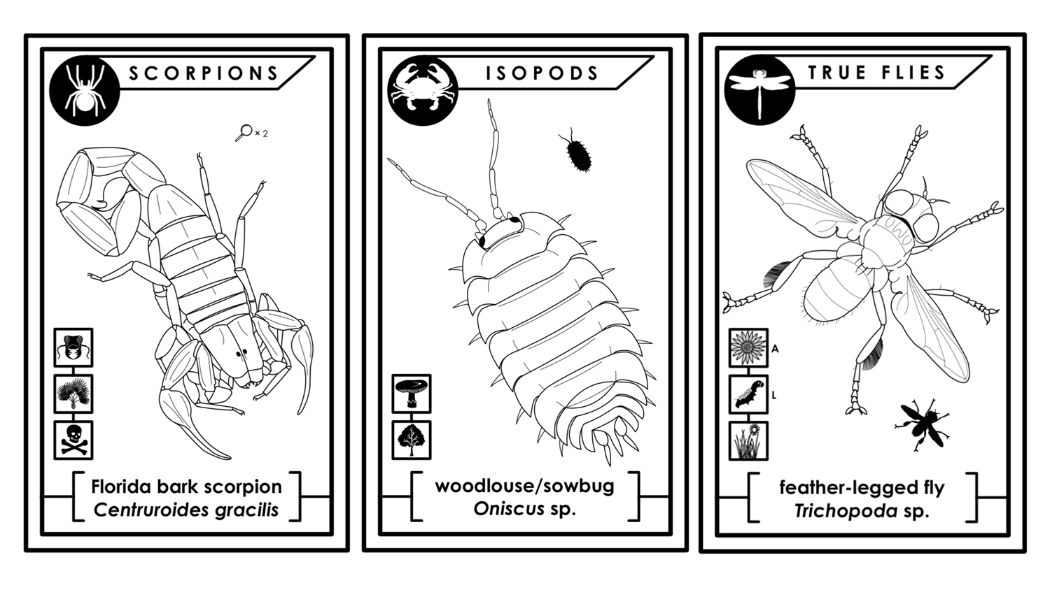 line drawings of arthropods from a coloring book