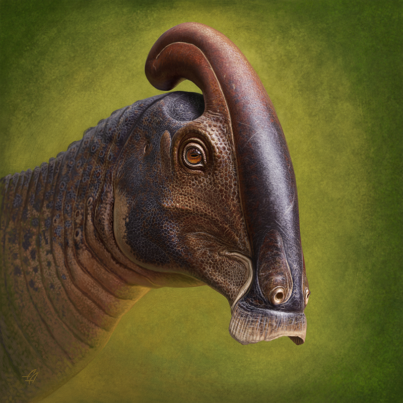 An illustration of the duckbill dinosaur with it's head crest