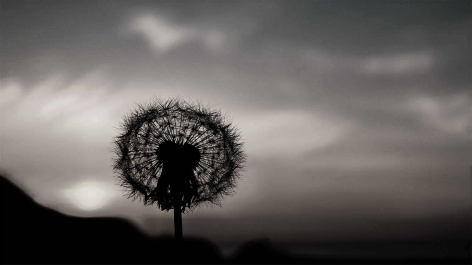 black and white photo of a dandelion against a cloudy sky