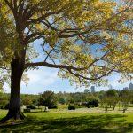An open field in Dix Park.