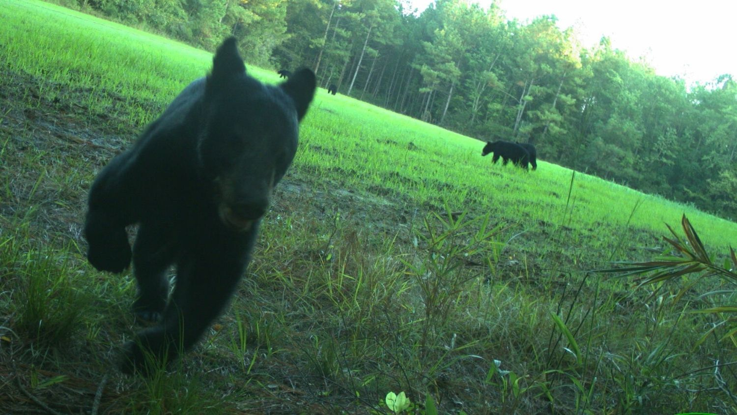 A citizen science study helped researchers capture wildlife images.