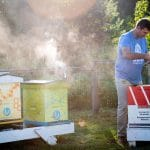 A man works among a cluster of beehives.