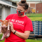 A woman wearing a face mask holds a piglet.