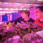 Two men handle plants in a room illuminated with pink light.