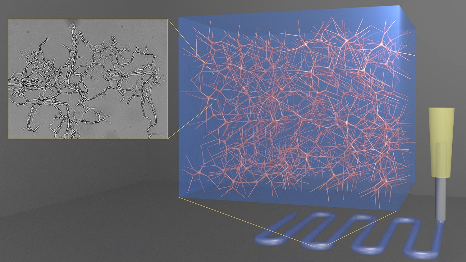 Image of 3D hydrogel