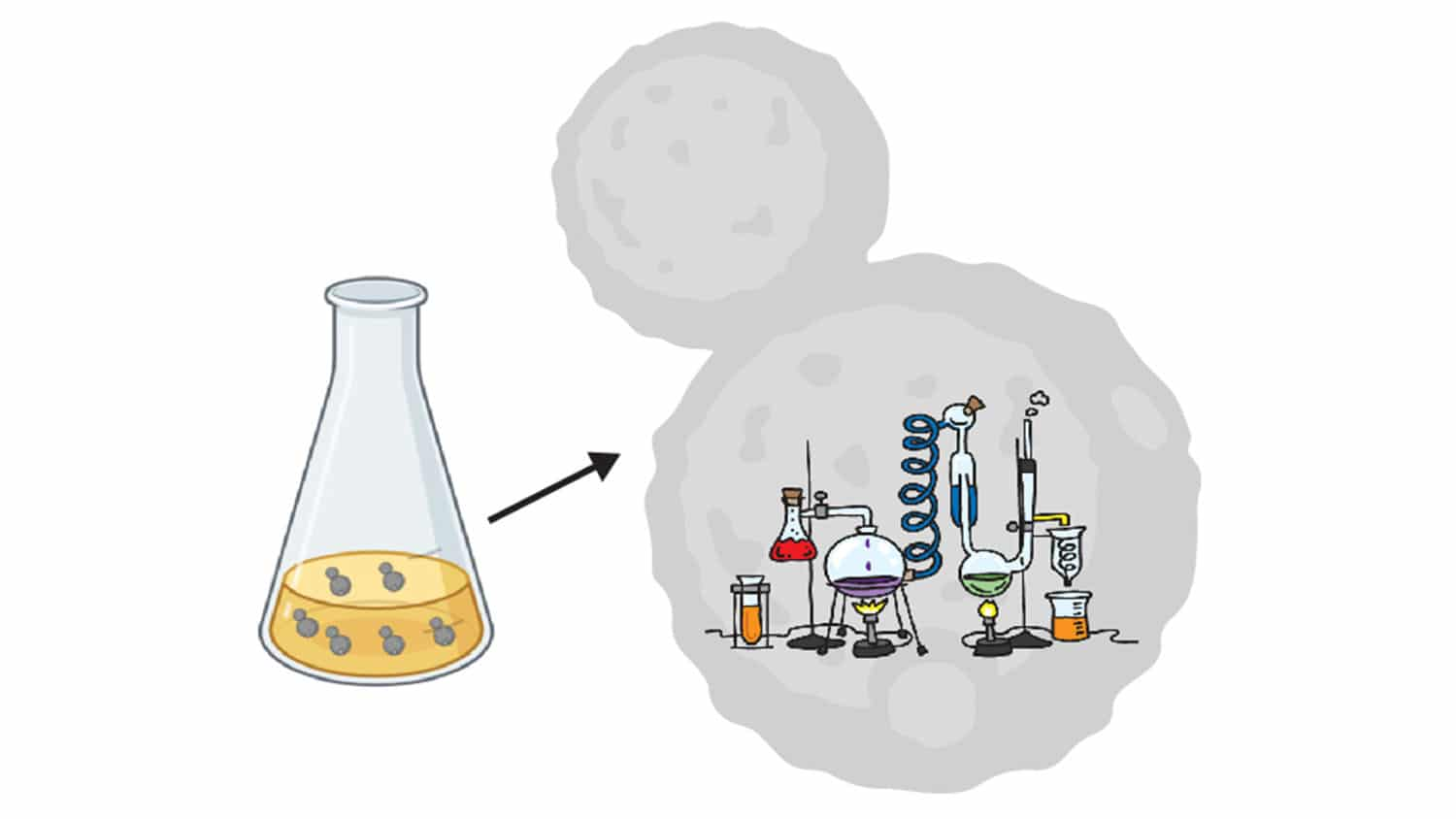 cartoon portraying yeast cells in a flask, with each cell containing a chemical laboratory