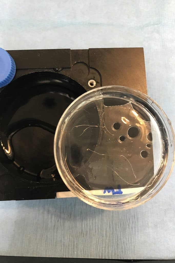 Plant samples returned to Earth from the International Space Station in small round containers.