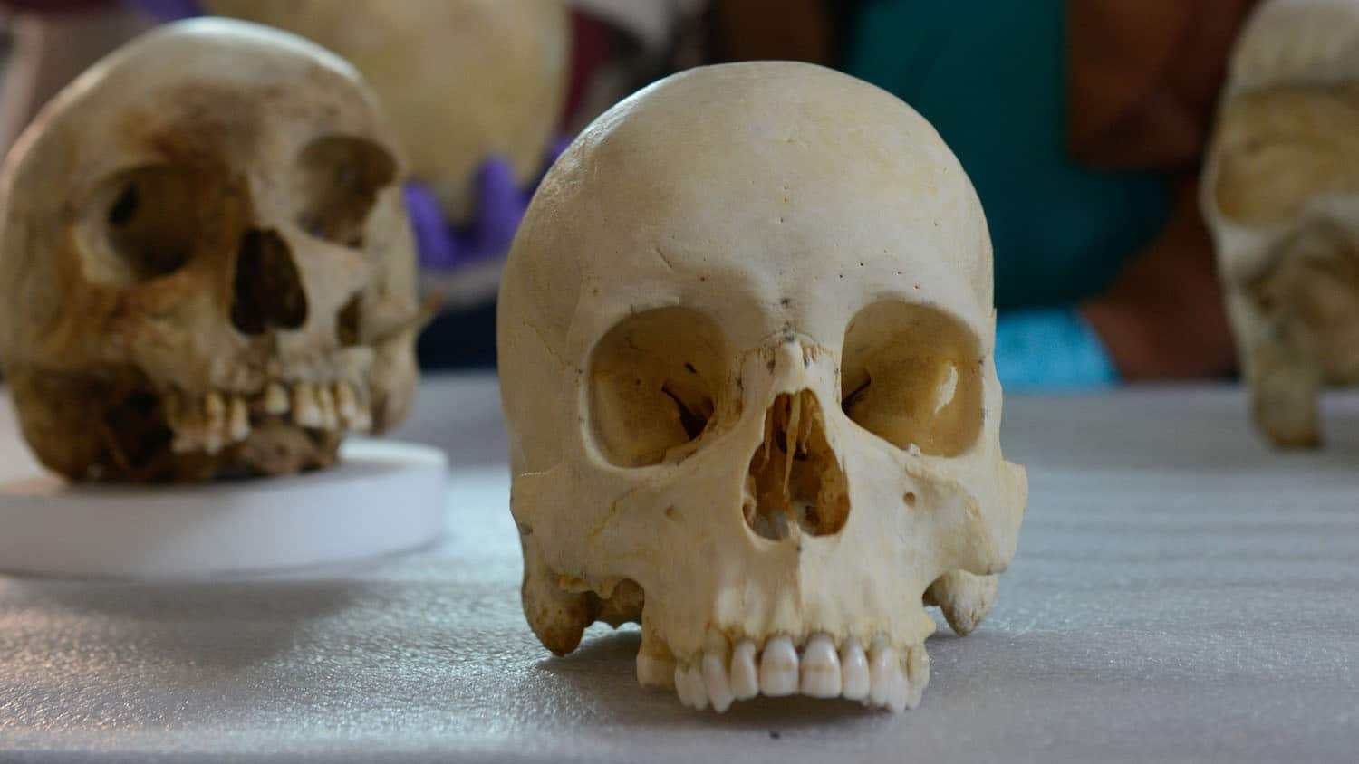 two skulls rest on a table in the research lab of forensic anthropologist Ann Ross