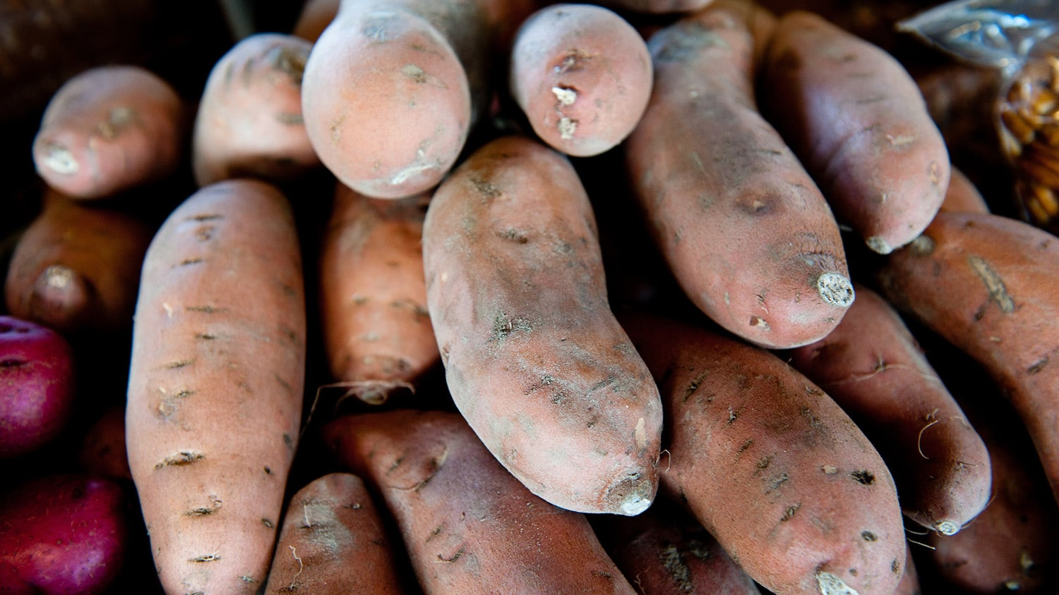 A stack of sweet potatoes at the farmers market