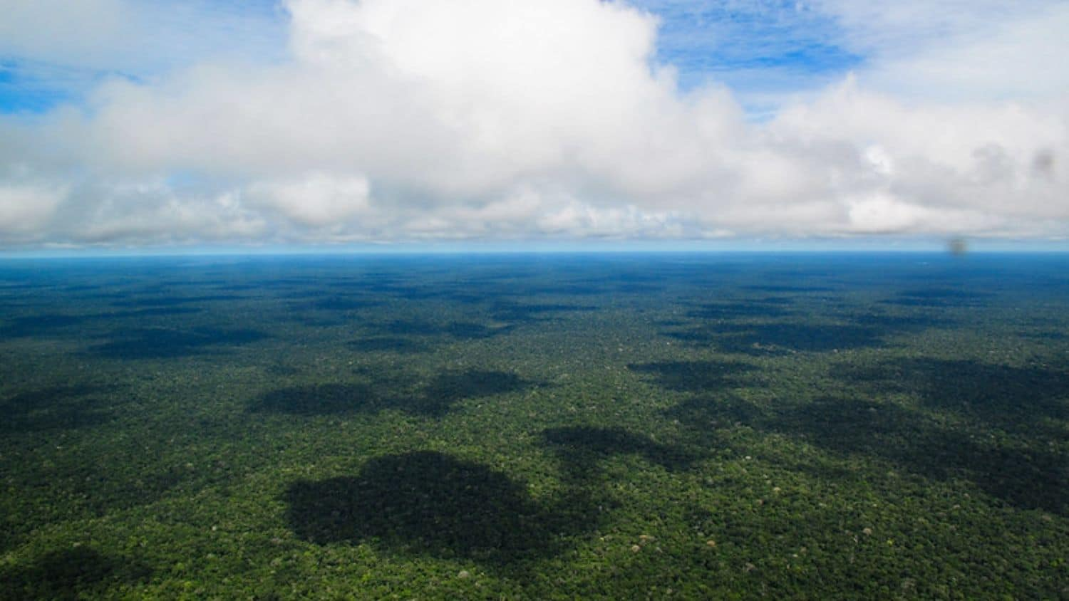 Aerial view of the Amazon rainforest.