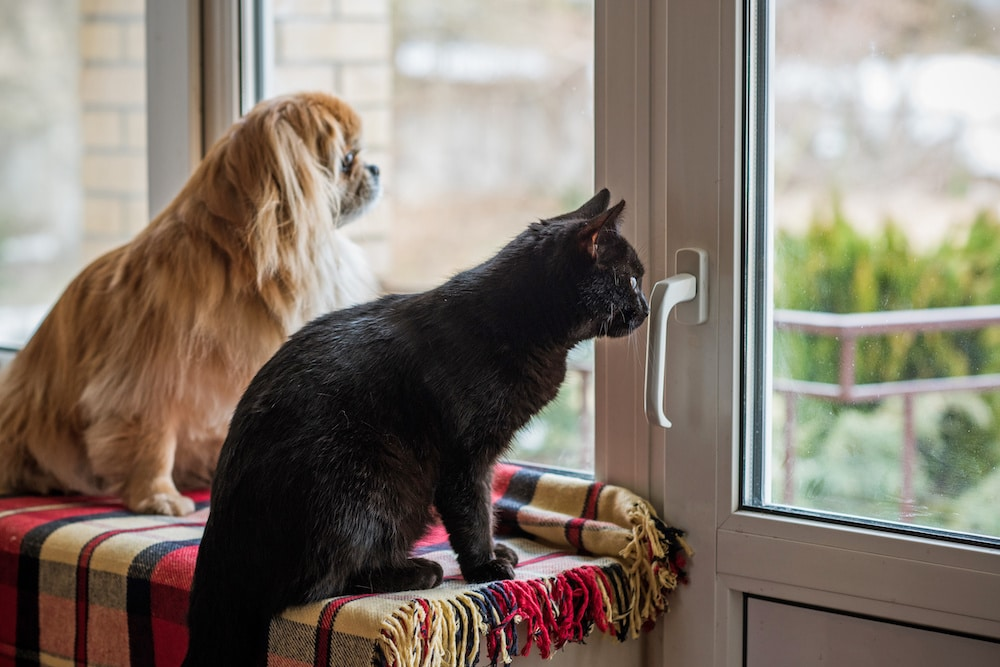 pets waiting for owner