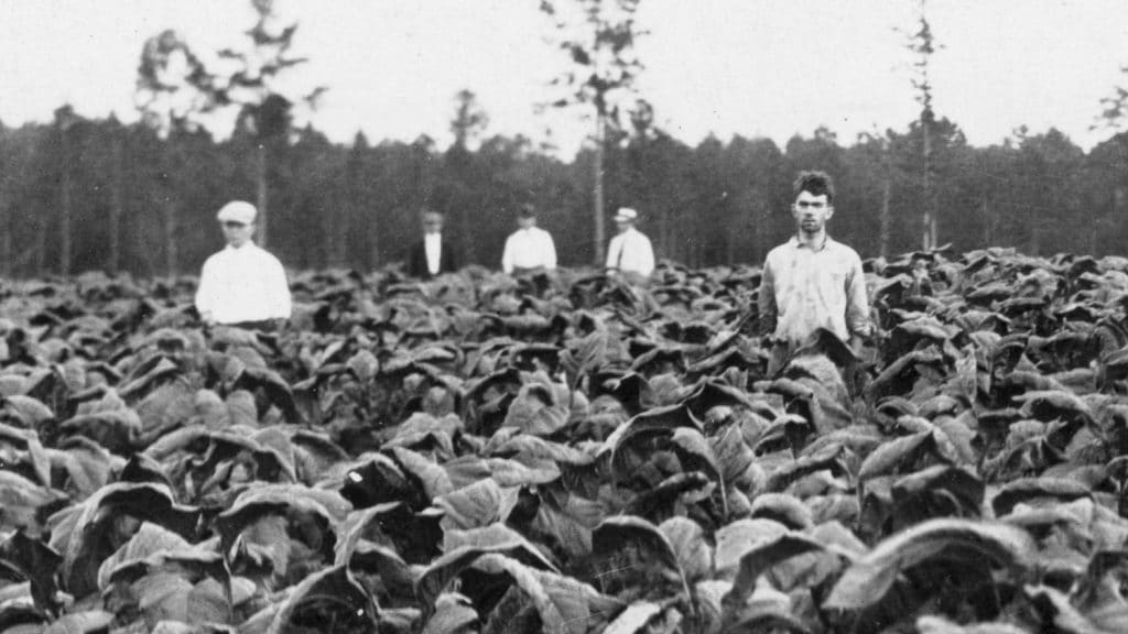 A black and white photo of five men standing in a field of crops, circa 1916.